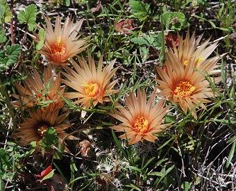 orange-p-n-cactus401