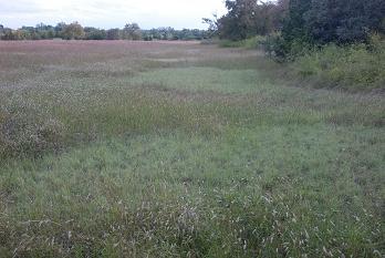 shortgrass-lawns388
