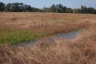 east-grass-natural224