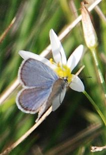 unk-blue-butterfly209