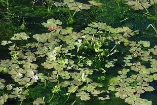 creek-woods-water-plants164