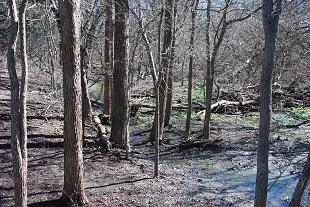 flood-creek-woods132