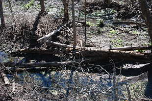 flood-creek-woods135