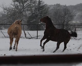 snow-2-horses080