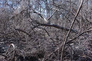 tree-down144