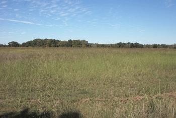 October-west-grass042