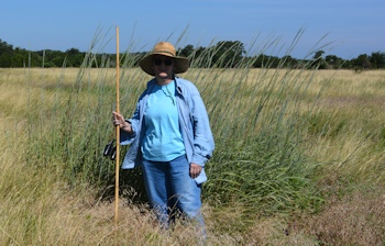big-bluestem-Center-Walk-7-21-15